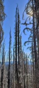 Bench Lake Burned Forest with nameplate' (1).jpg
