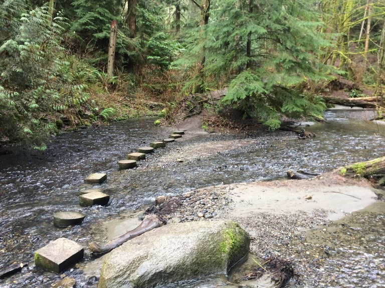 Stepping stones going across a creek.
