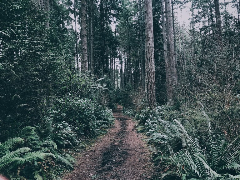 Bridle Trails State Park.jpeg