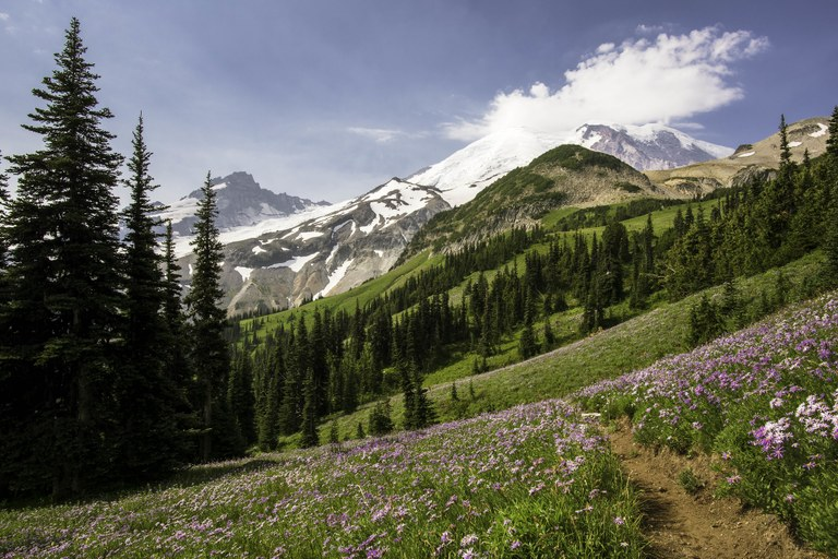 Burroughs Mountain Trail Mount Rainier National Park
