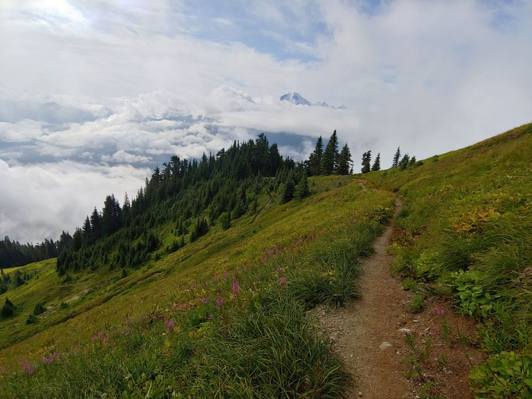 Trail through meadow with Mount Baker in background.