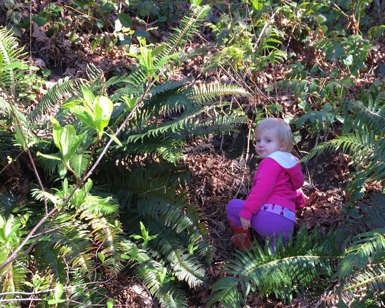 Climbing a Hillside Krista Dooley