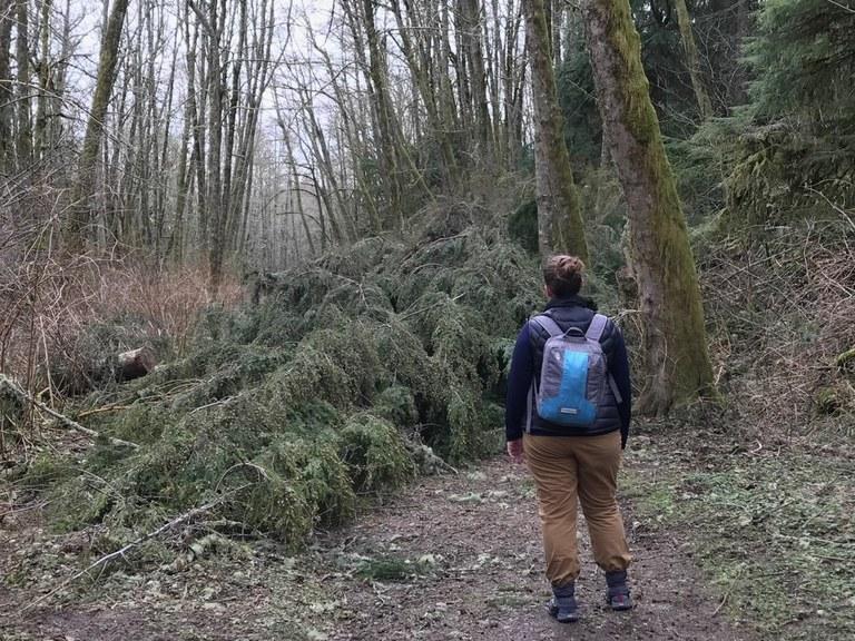 cougar mountain tree down_adam levermore.jpeg