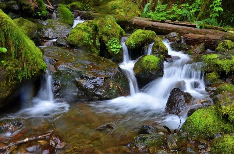 Creek. Photo - Dana Wilkins.jpg