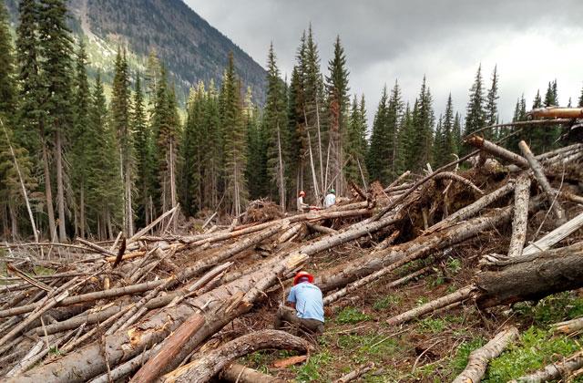crew in field of logs mcbride