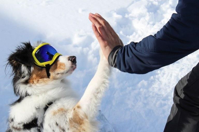 Hiker High Fives Pup