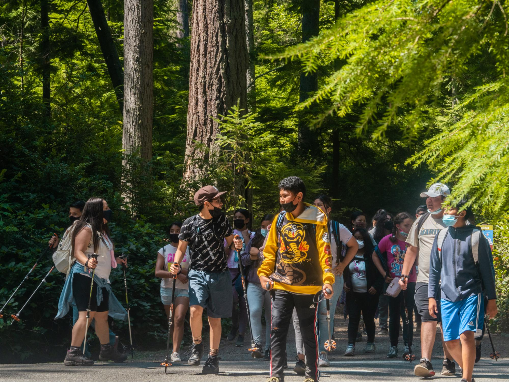 A group of hikers explores a trail with evergreen trees at the edge.