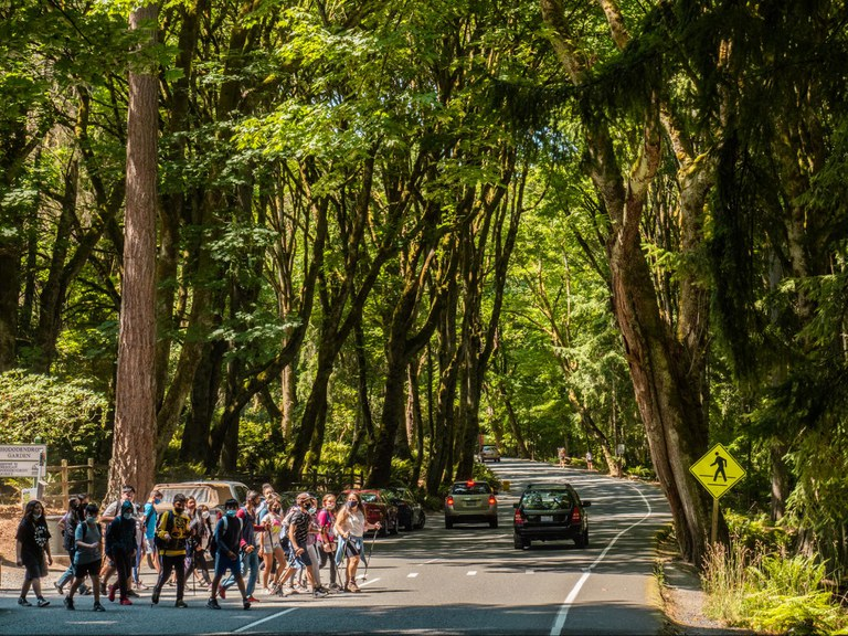 A group of hikers cross a street, under leafy trees, with two cars in the background and a crosswalk sign on the right.