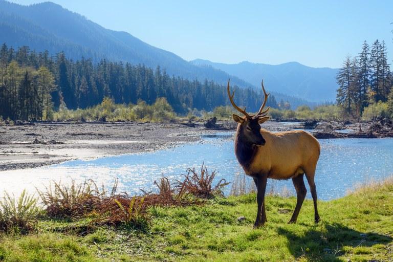 Elk. Photo by Christopher Walker.jpg