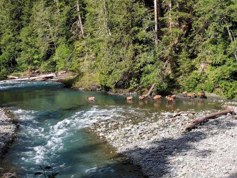 Elwha River by rcwaters.jpeg