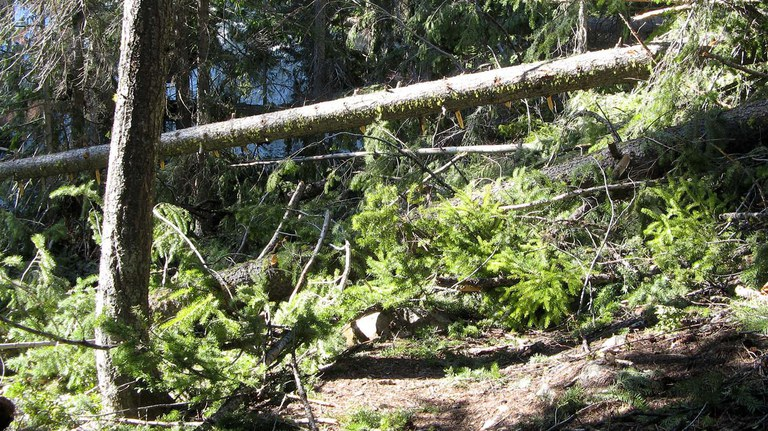 A jumble of several trees that have fallen over the trail, obscuring the trail entirely.