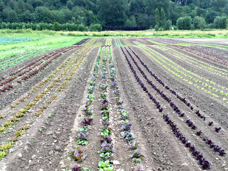 farm coop.JPG