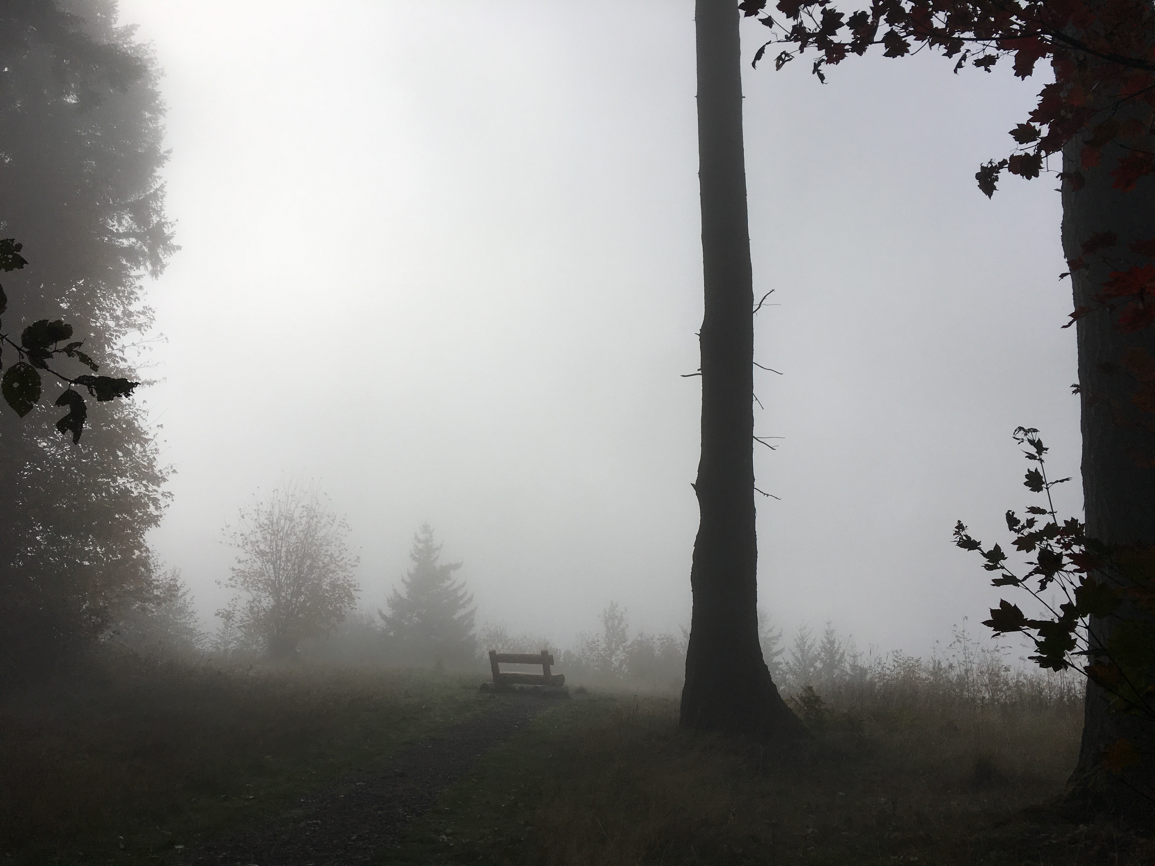 Foggy Viewpoint on Margaret's Way Photo by clopez.JPG