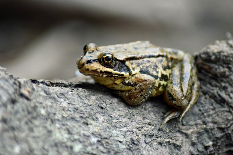 Frog on a Log. Photo - Anna DuBois.jpg