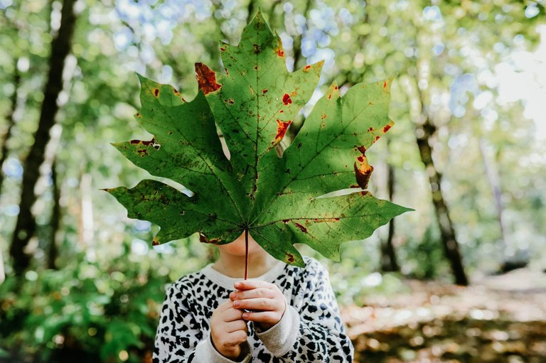 giant leaf brandi stafford.jpg