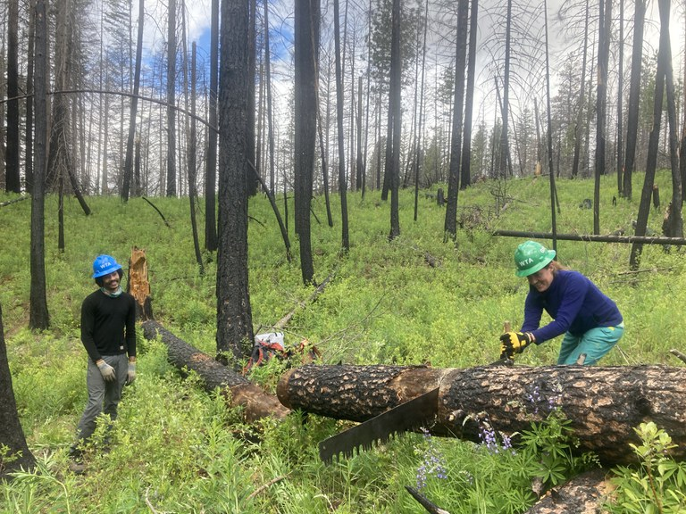Ginerva saws through a log during the crew's training week in the Teanaway.
