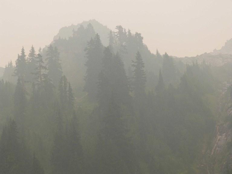 Evergreen trees seen through dense smoke.