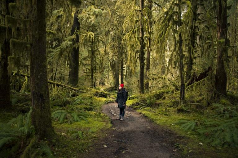 hoh rainforest mike cox.jpg