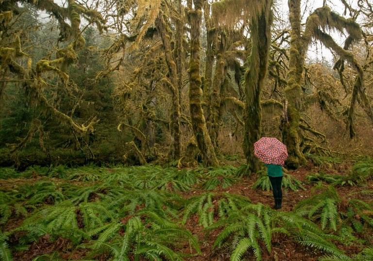 Hoh Rainforest. Photo - Keith LaPlante.jpg