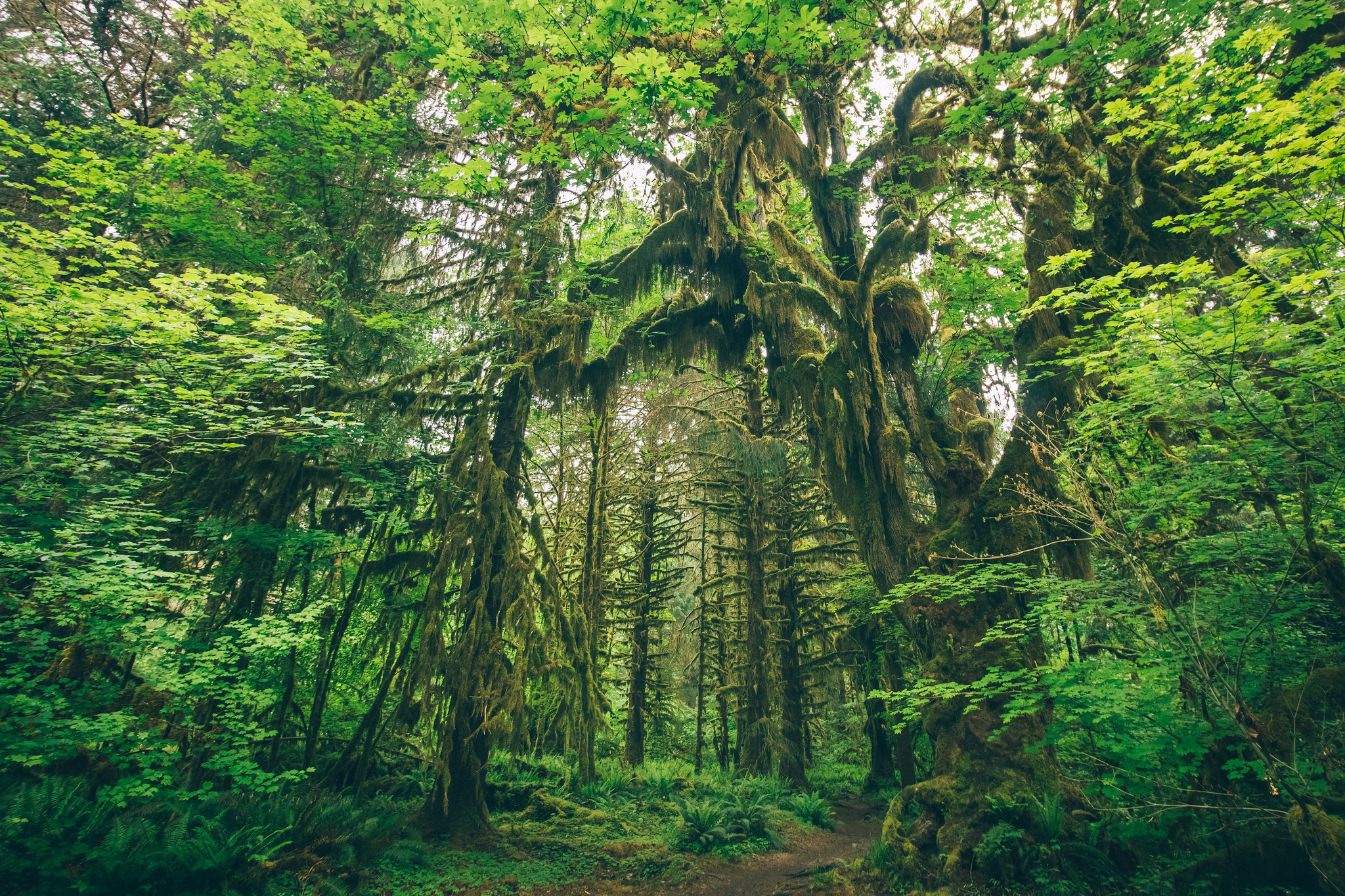 Hoh River Trail by Isabel Uriarte.jpg