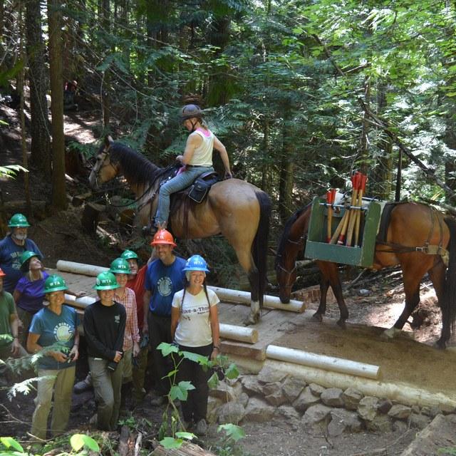 horse on bridge todd dunfield