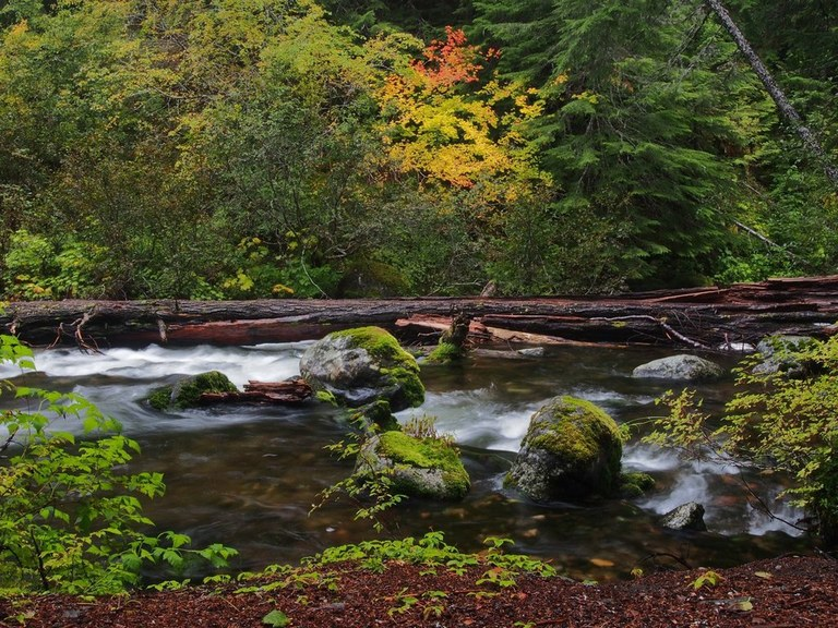 Flowing creek under bright fall colors.