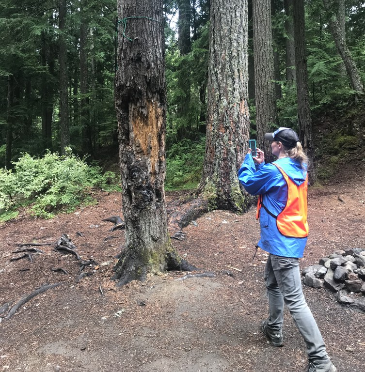 A person wearing an orange safety vest takes photos of a tree with visible damage.
