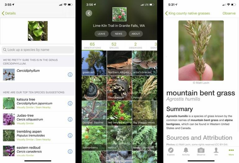 Screenshots of iNaturalist app.