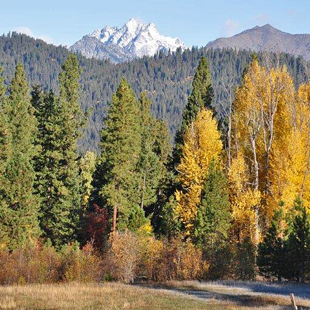 Teanaway Community Forest by Kitty Craig.