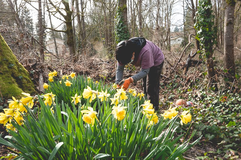 One of our L&I Crew members in a field of daffodils