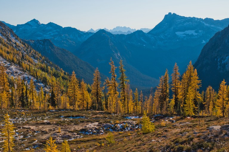 Larches on the Pacific Crast Trail, another Washington gem that has received LWCF funds. Photo by hikingshen..jpg