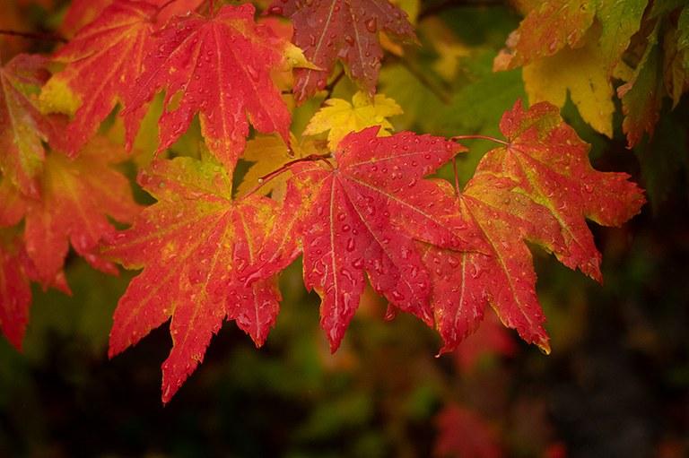 leaves_lisa merrill.jpg