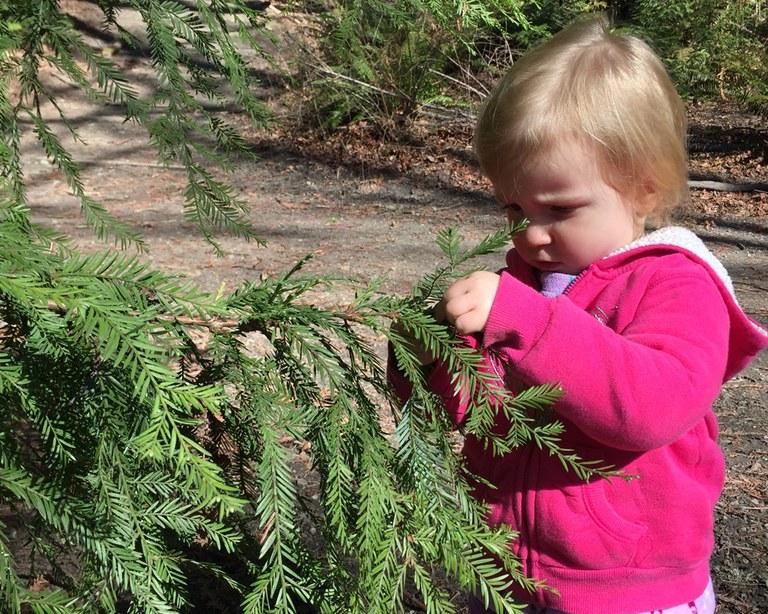 Child looking at a cedar branch Krista Dooley