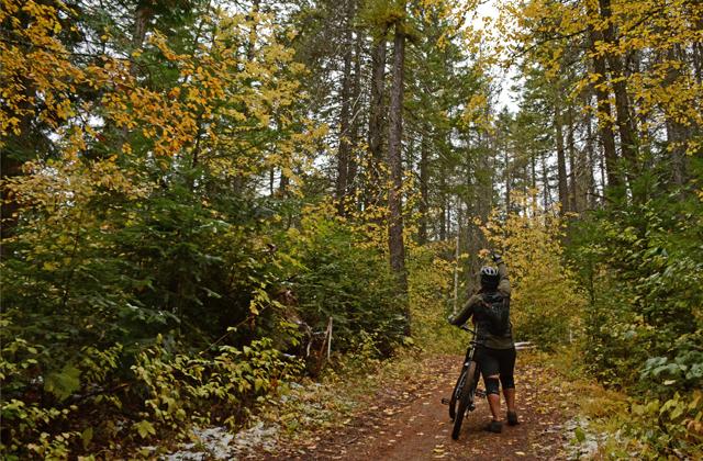 looking-at-trees_anna-roth.jpg