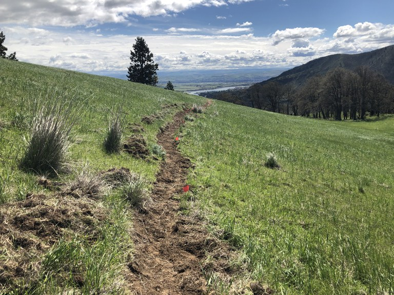 New trail at Lyle Cherry Orchard