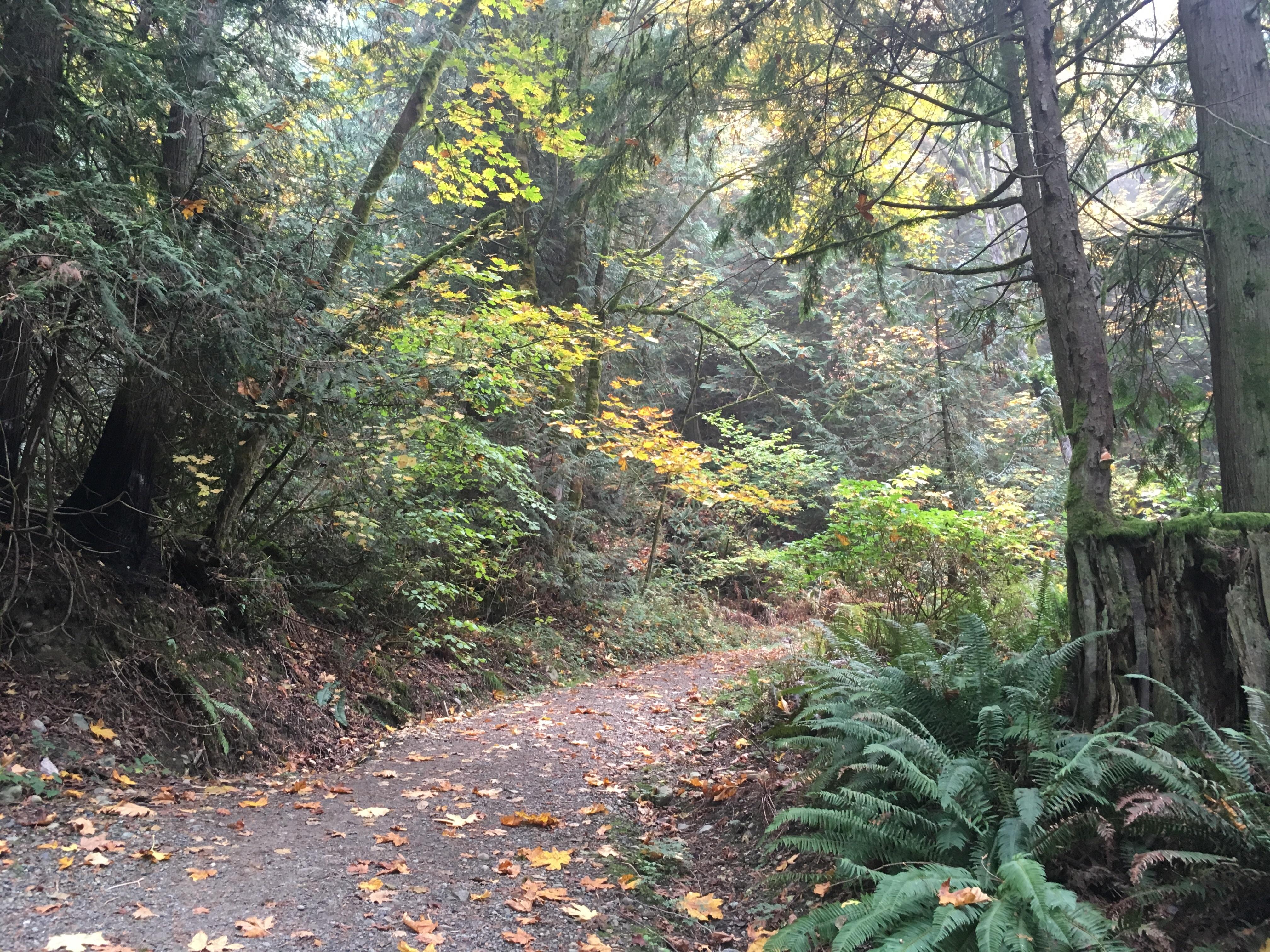Margaret's Way Trail Photo by clopez.JPG