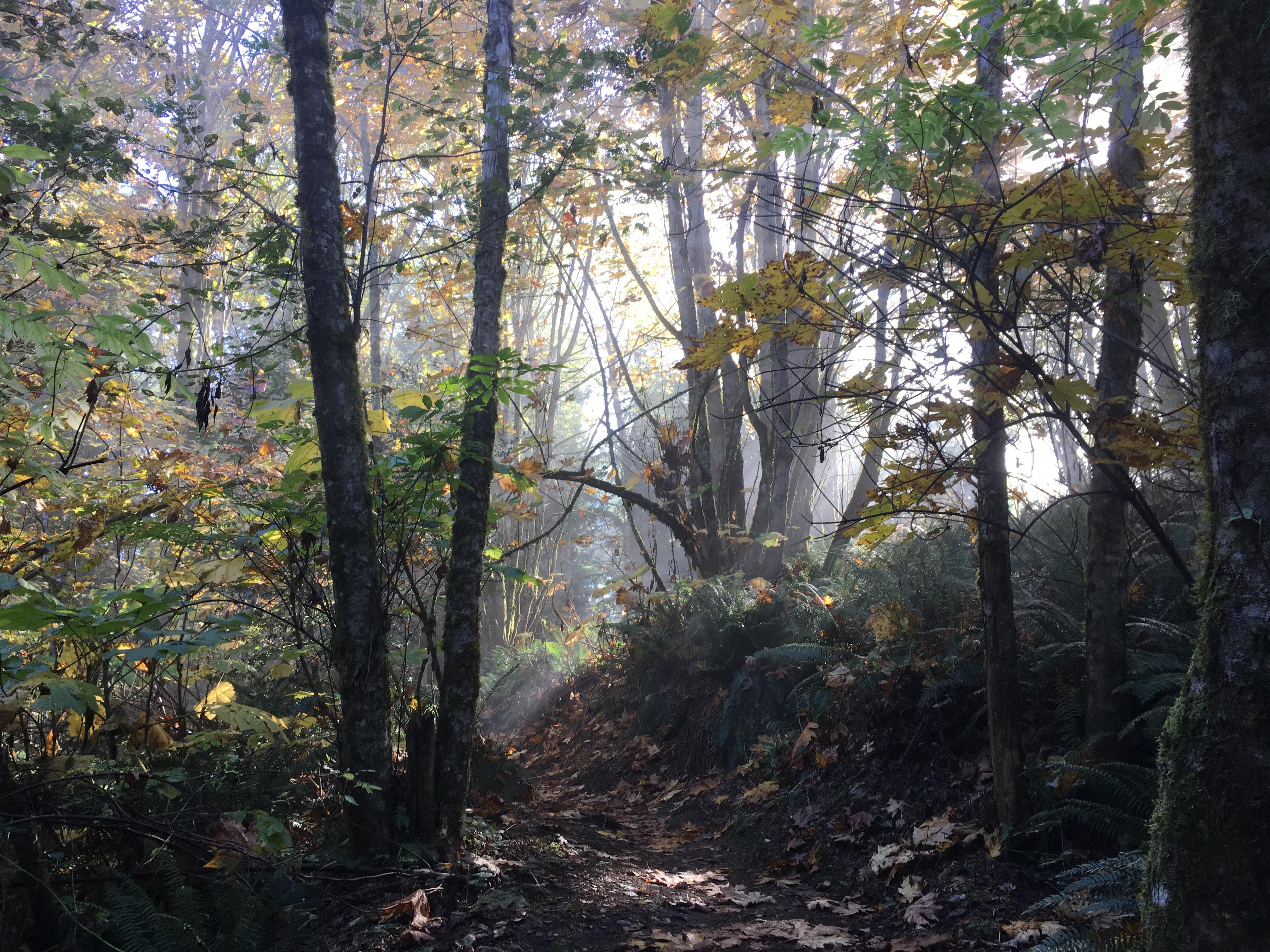 Margaret's Way Trail sun Photo by  clopez.JPG