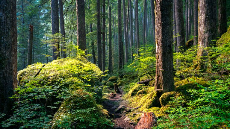 A forested trail covered in bright green moss. Photo by Aaron Wilson.