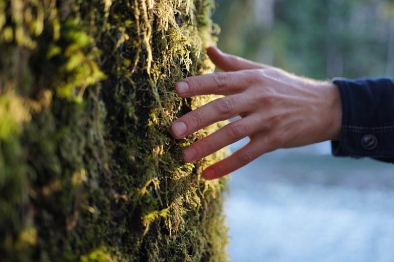 mossy tree britt le.jpg
