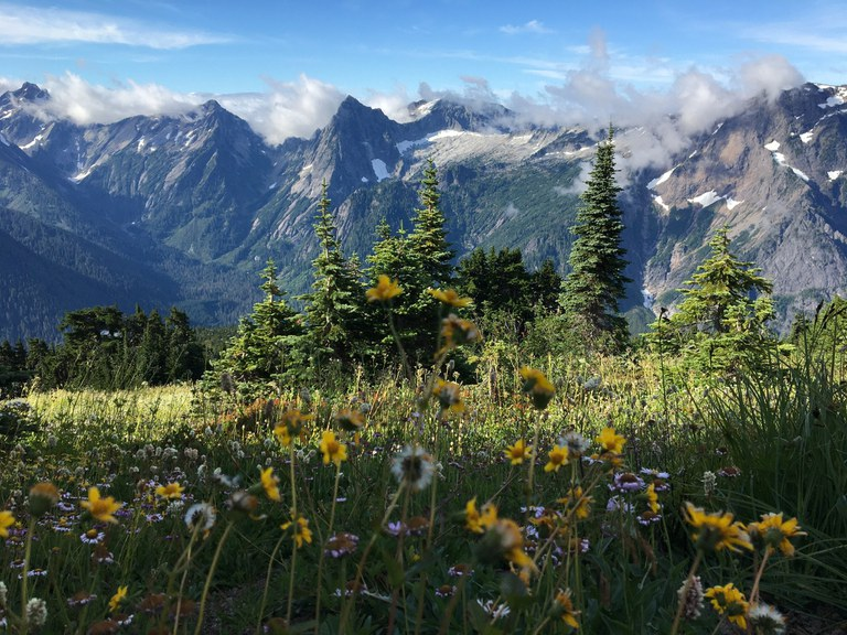 Mount Dickerman flowers in the spring. Photo by YogiMtnMama