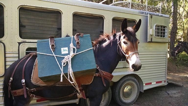 mule-at-volunteer-vacation_rick-beckel.jpg