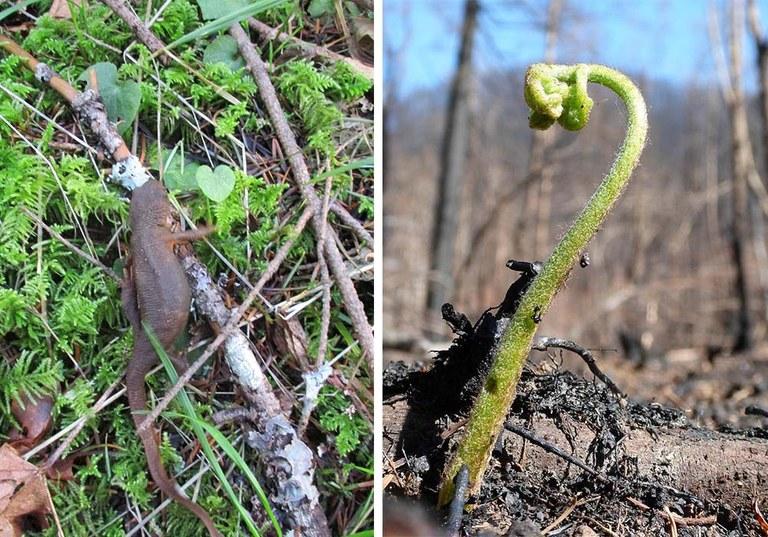 newt and fern.jpg