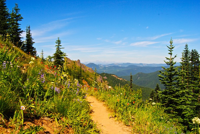 A trail traverses a slope with wildflowers and grass growing on each side. Mountains and skies stretch in the background.