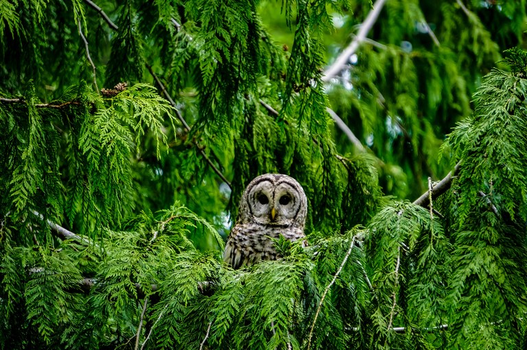 Owl. Photo by Mel Pappas.