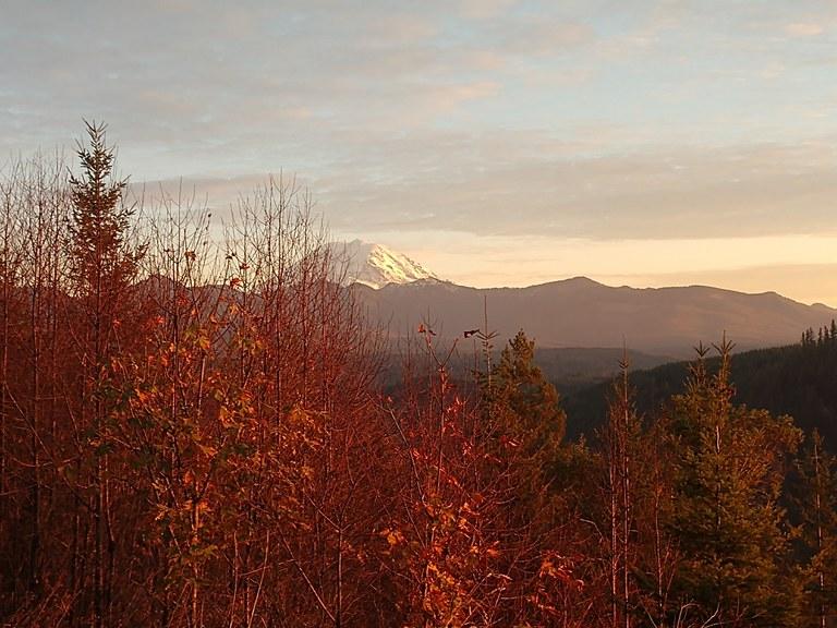 Mount Rainier through fall foliage.
