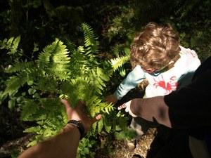 pretzel tree ferns web elderkin.jpg