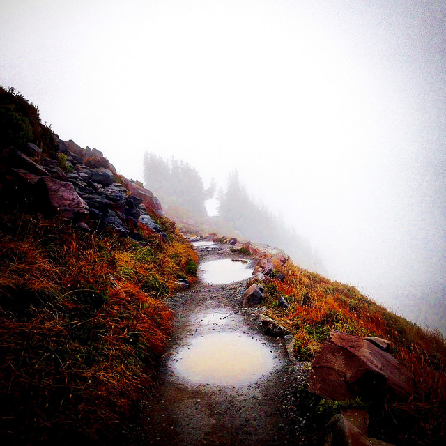 Puddles on Mt. Rainier by Simone Nelson.jpg
