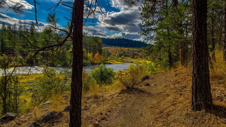 a trail with a view of the Spokane River and ponderosa pine trees. Photo by Frankie Benka.