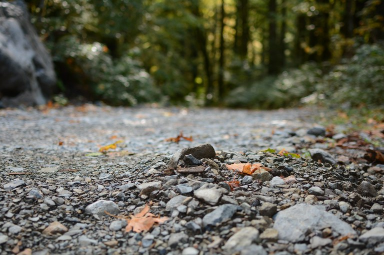 An photo of a gravel road from a low angle, with the green background blurry.