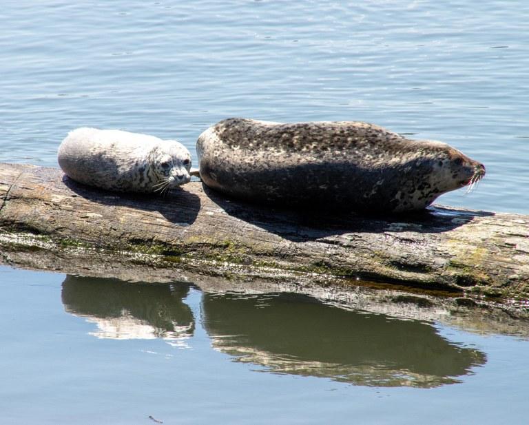 sea lions_muledeer.jpeg